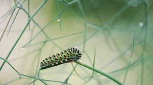 Watch this Cute #Caterpillar Video!