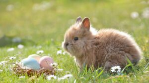 What did Peter Rabbit say?