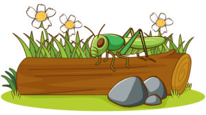 Did You Know? Grasshoppers