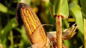 Dry Farming – Did you Know?